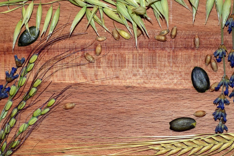 Кои зърнени храни не съдържат глутен - Нутрима бг