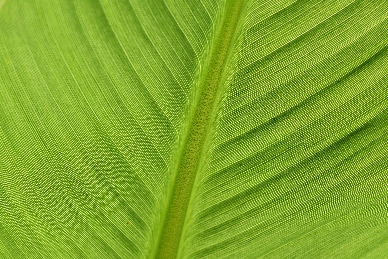 Баластни вещества - видове, ползи и храни-Нутрима-бг-4