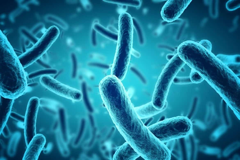 Какво представляват полезните бактерии-Нутрима-бг
