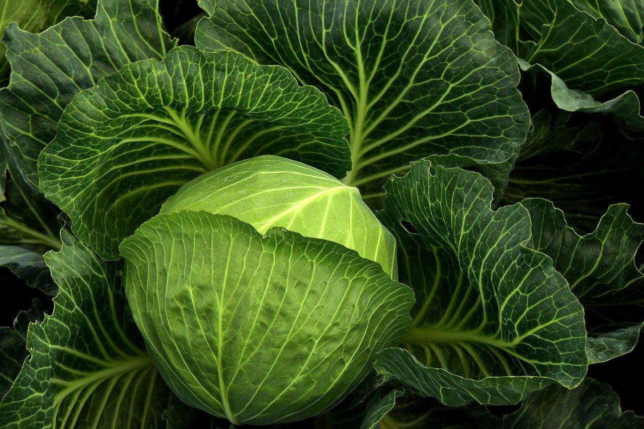 Топ 10 на най-полезните противоракови зеленчуци-Нутрима-бг-6