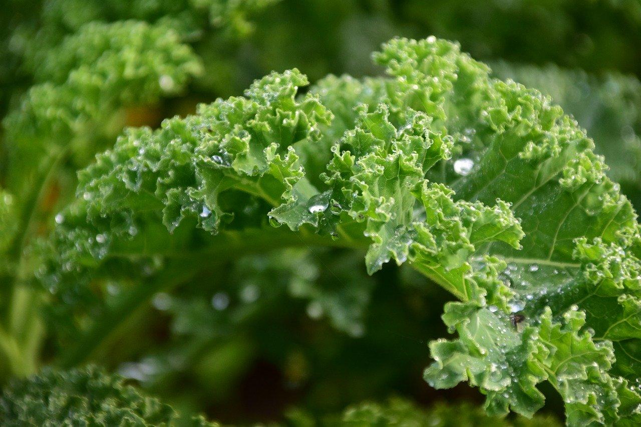 Топ 10 на най-полезните противоракови зеленчуци-Нутрима-бг-8